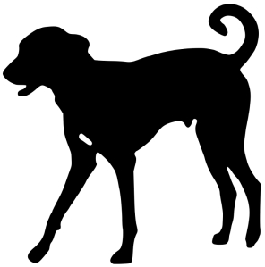 dog-via-wikimedia