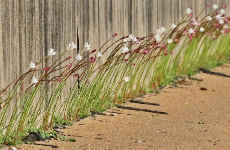 flowers-roadside-20160930-crop